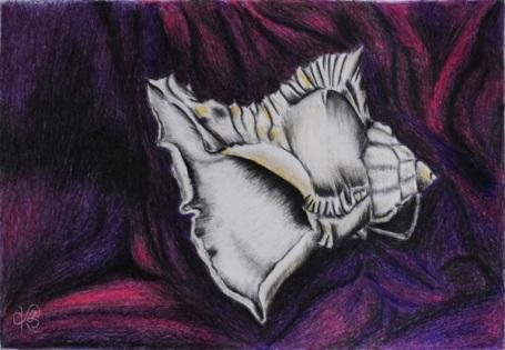 Shell On Velvet