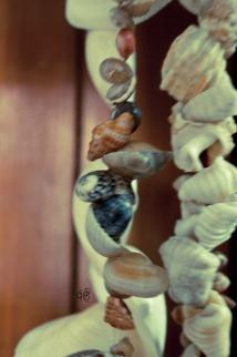 Seashells in colour