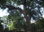 Providing shade