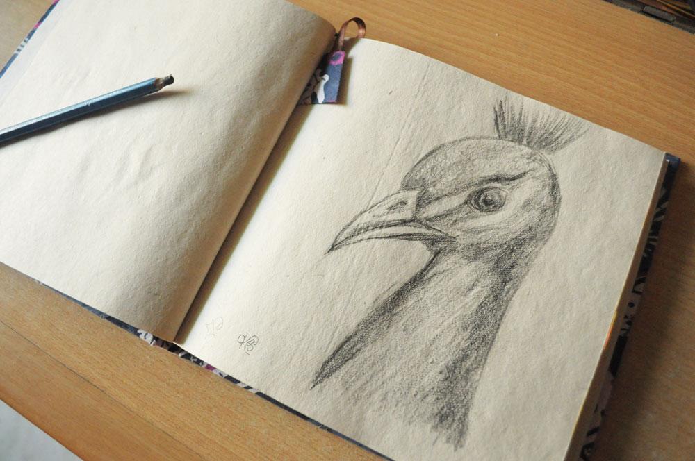 Pencil Sketches Peacock Peacock Pencil Sketch