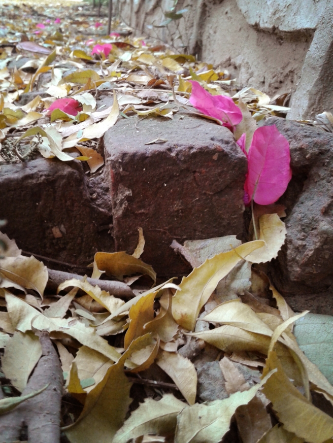 leaves and bougainvillea
