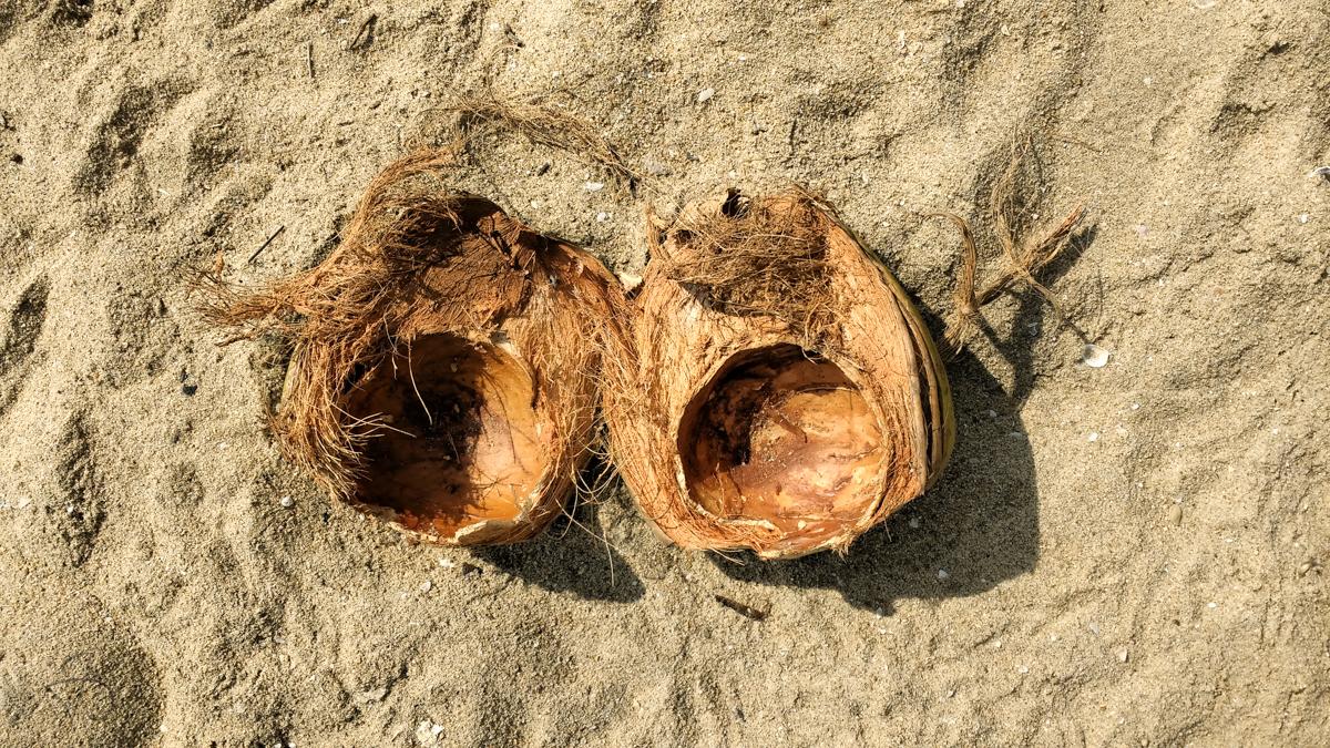 coconut-eyes