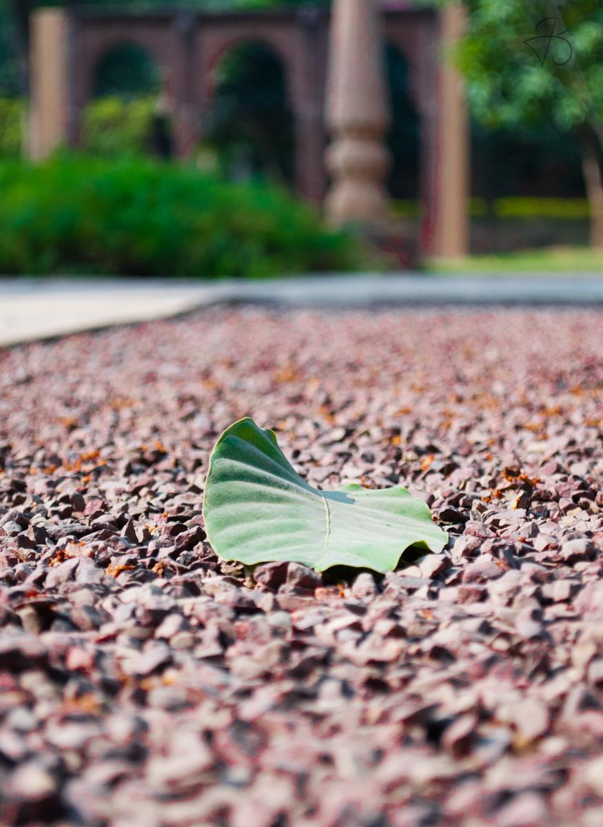leaf_on_the_ground